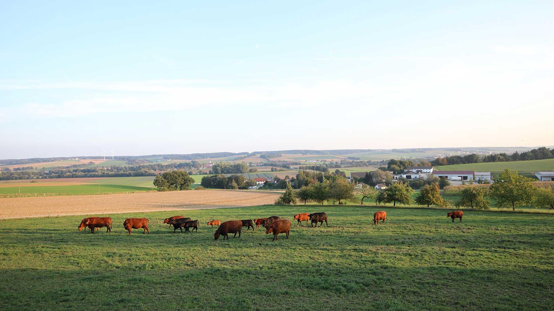 vilstalerhof-regional-Angus-Rinder-004